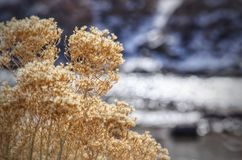 Winter szenischer Arkansas River in Süd-Colorado Stockfotografie