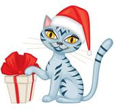 Winter tabby cat with a gift Royalty Free Stock Images