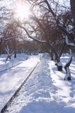 Winter-Tag im Park mit hellem Sun Stockfotos
