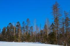 Winter taiga Royalty Free Stock Photos