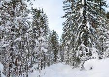 Winter taiga Stock Photos