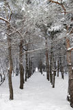 Winter tale Royalty Free Stock Images