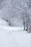 A winter tale landscape. A winter landscape in the city park Royalty Free Stock Photos