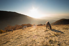 Winter tale with mountain sunrise and horses Royalty Free Stock Image