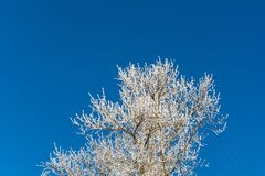 Winter `s tale Royalty Free Stock Images