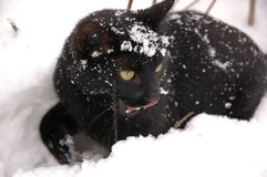 Winter tale3. Cat in the snow Stock Photo