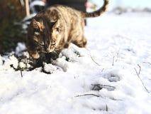 Winter tales stock photo