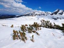 Winter in Tatra Mountains Royalty Free Stock Photo