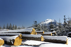 Winter in tatras mountains in poland  with heap of pieces of wood Stock Photography