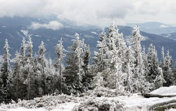 Winter in Tatras Stock Photos