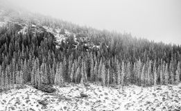 Winter in Tatras Royalty Free Stock Images