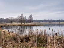 Winter at Tatton Park Stock Photography