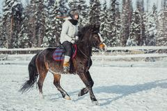 Winter jump horse ride jumping Stock Images