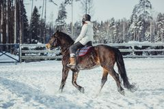 Winter jump horse ride jumping Stock Photo