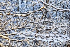 White texture of forest at winter. White snow trees in winter forest. Winter forest with frozen trees. Cold day in snowy winter. Winter texture of forest at royalty free stock image