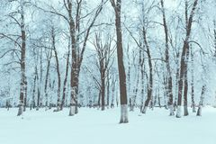 Winter texture and frosty background. Snow covered tree trunks. Winter texture and frosty background stock image