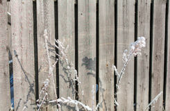 The winter texture of the wooden fence. The background is a wooden fence in the winter on a Sunny day Royalty Free Stock Images