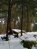 Winter thaw. Walk in the woods on a sunny day royalty free stock photos