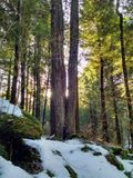 Winter thaw. Walk in the woods on a sunny day stock photos