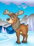 Winter theme with reindeer Stock Photo