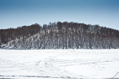 In winter there is snow on the grassland with silver birch forest. Stock Image