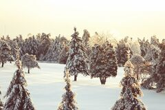 Free Winter Three Stock Photography - 86290092