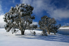 Winter at three mile dam, Kosciuszko National Park NSW Australia. Fresh snow covering trees with animal tracks on a sunny winters day with frozen lake in the Royalty Free Stock Photography