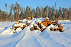 Winter timber harvesting. In Russia Royalty Free Stock Photos