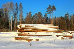 Winter timber harvesting. In Russia Royalty Free Stock Photo