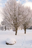 Winter time royalty free stock photos