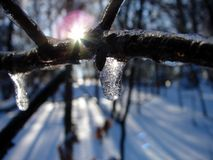 Winter time. This was a small icicle that formed on a tree limb after a storm Royalty Free Stock Photo