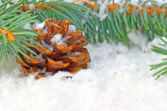 Winter time. Pine cone with fir branch and snow Royalty Free Stock Photo
