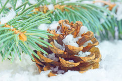 Winter time. Pine cone with fir branch and snow Stock Photography