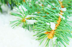Winter time. Fir branch and snow in the winter Stock Photo