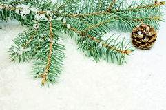 Winter time. Pine cone with fir branch and snow Stock Images