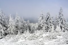 Winter time. Frozen forest in the middle of December(Ciucas mountains,Romania Stock Photography