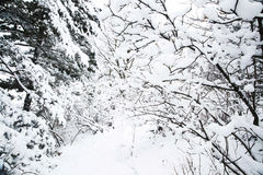 Winter Time Royalty Free Stock Photo