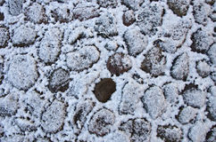 Winter time cobblestone pavement background Royalty Free Stock Photo