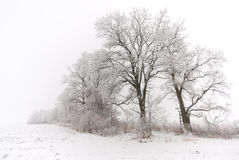 Winter time on the fields. Frost on trees during winter Stock Images