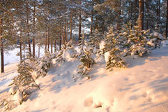 Winter time in forest Stock Photography