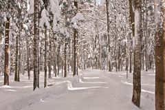 Winter time in the forest Stock Image