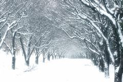 Winter time in forest Royalty Free Stock Photography