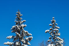 Winter time in the forest. Over blue sky Stock Photos