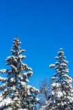 Winter time in the forest. Over blue sky Royalty Free Stock Photography