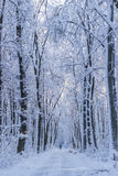 Winter time in the forest Royalty Free Stock Image
