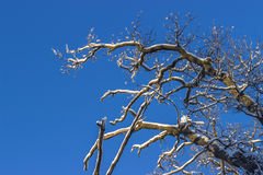 Winter time in the forest. Over blue sky Stock Image
