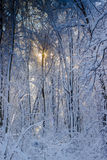Winter time in the forest Stock Photos