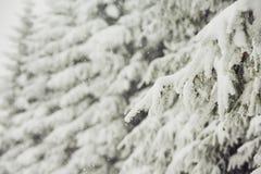 Winter time Stock Photos