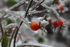 Winter time. Frozen red fruits stock photography