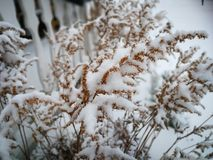 Winter time in the garden. Snow cowered plants stock photo